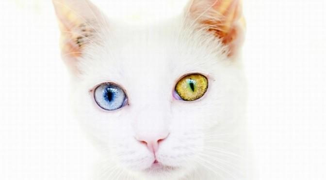 Cat Simulator New скачать торрент - фото 11