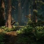 Redwood_01