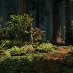 Redwood_02