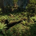 Redwood_04