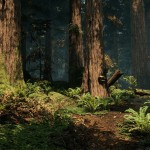 Redwood_06