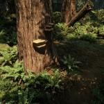 Redwood_03