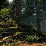 Redwood_07