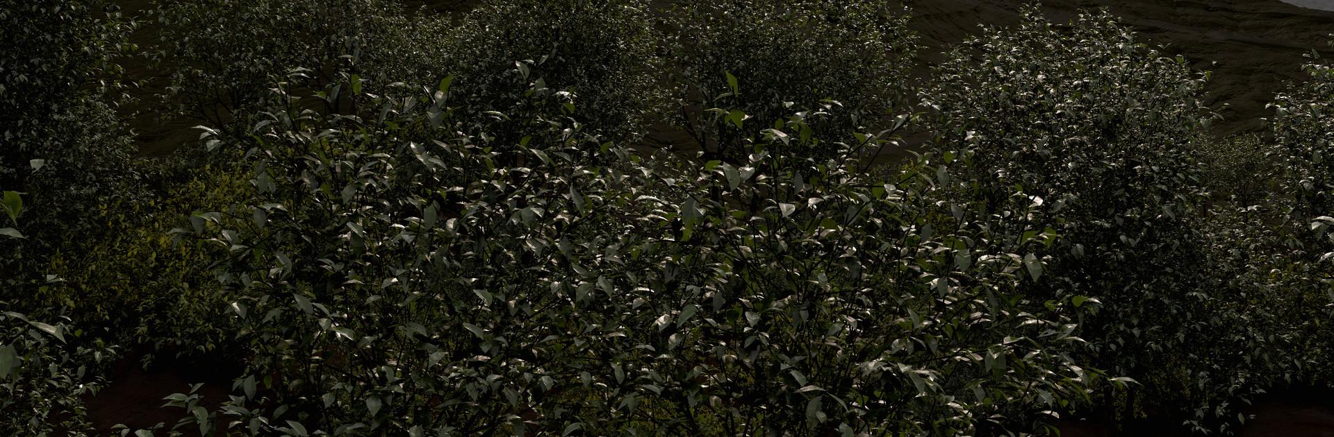 eoin-o-broin-foliage