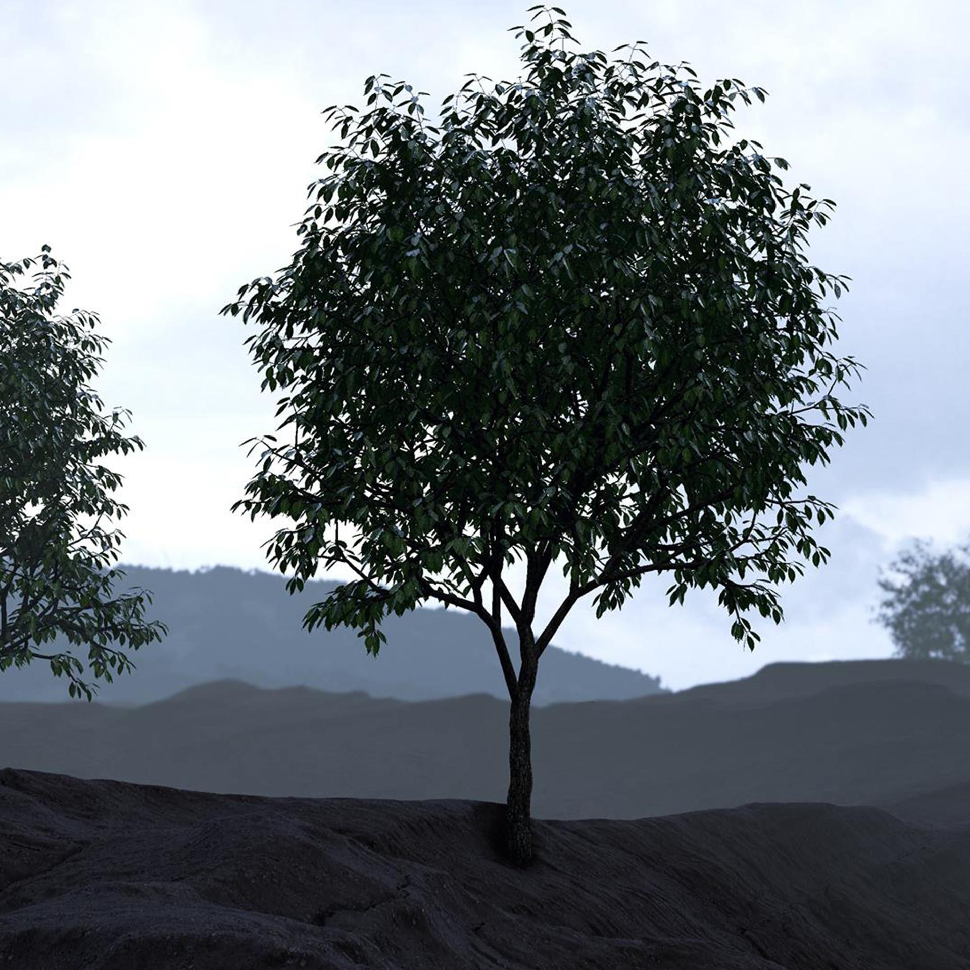 eoin-o-broin-tree