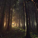 damian-stempniewski-svoti-forest-4