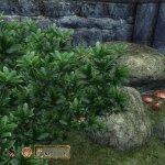 The Elder Scrolls IV Oblivion Upscaled 4x textures mod-5