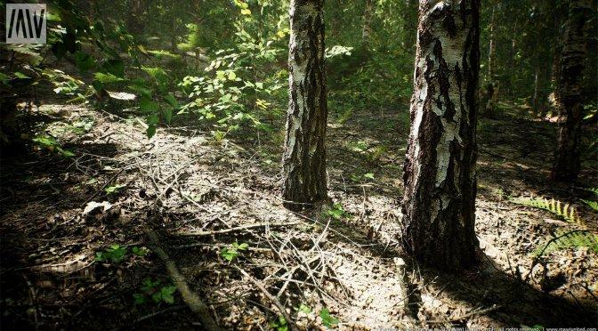 Unreal Engine 4 Birch Forest Map-1